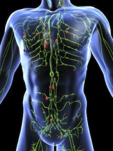 oedeem-lymfesysteem